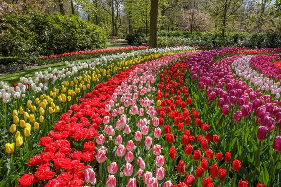 988076AD 7272 4856 B7E5 B40DDBA9D4FA - Primavera na Holanda - Especial Keukenhof