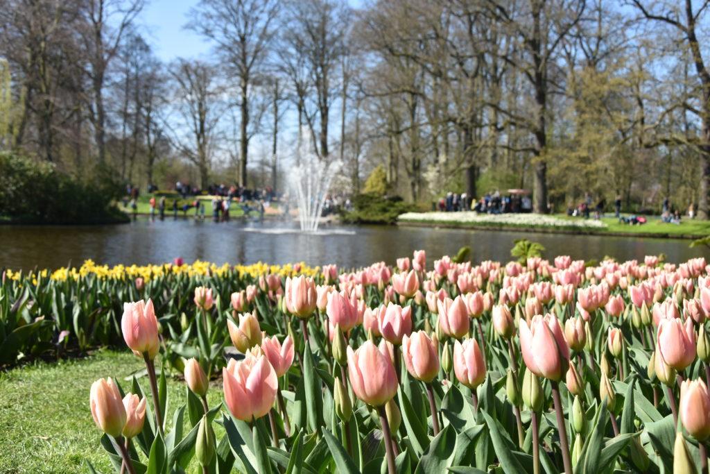 AMS 2711 1024x683 - Primavera na Holanda - Especial Keukenhof