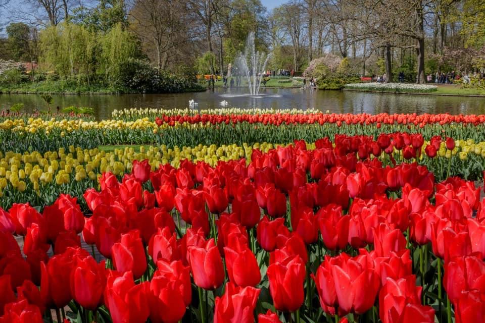 C6F39AEF 2392 4006 AA30 A0D33E912E73 - Primavera na Holanda - Especial Keukenhof